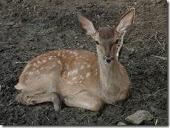 2009_08_23_Hirschen Bambi